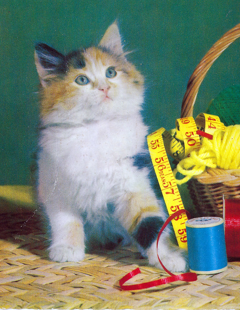 postcats2