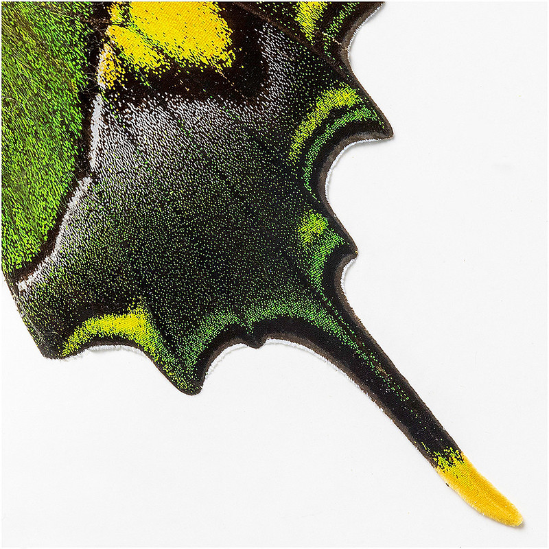 Nature's Pointillism by Barbara Dunn - Abstract Theme Digital Award - Mar 2021
