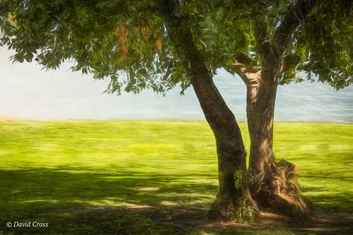 lawn oaktree suttersfortstatepark landscape lightroom6 sacramento topazstudio wall canonef24105mmf4lisusm canon5dmarkiii california