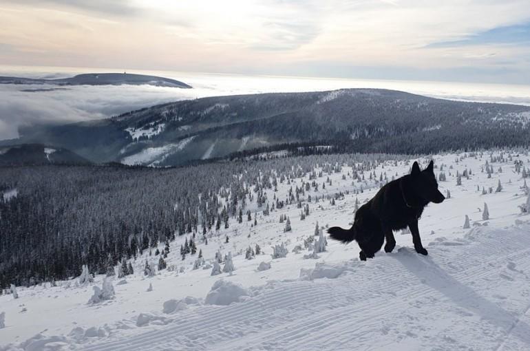 Pes na skialpovou túru?