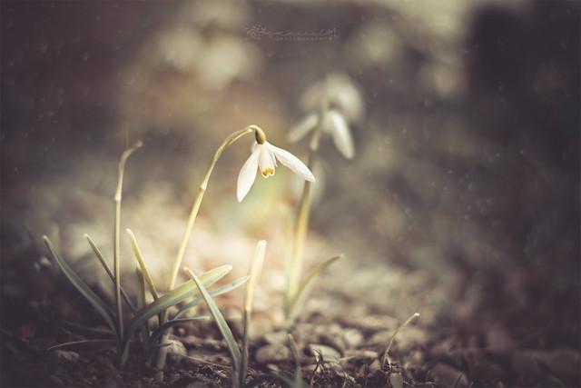 .Spring is the season where hope blossom. ⚘