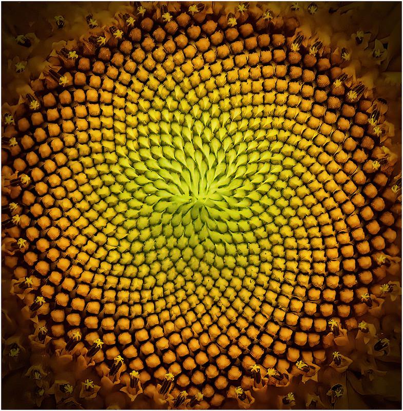 Radiant Spiral by Barbara Dunn - Abstract Theme Digital HM - Mar 2021