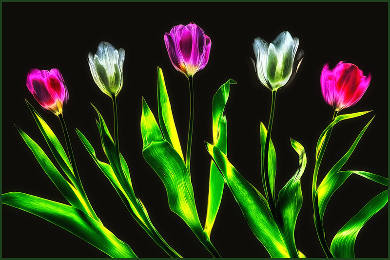 Absract Tulips by Marcia Nye - Abstract Theme Digital HM - Mar 2021