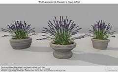 .:Tm:.Creation Pot Lavender & Daisies 3 types GP37