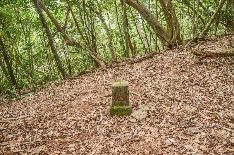 姑仔崙社冠字補沖(47)山字森林三角點(Elev. 331 m) (1)