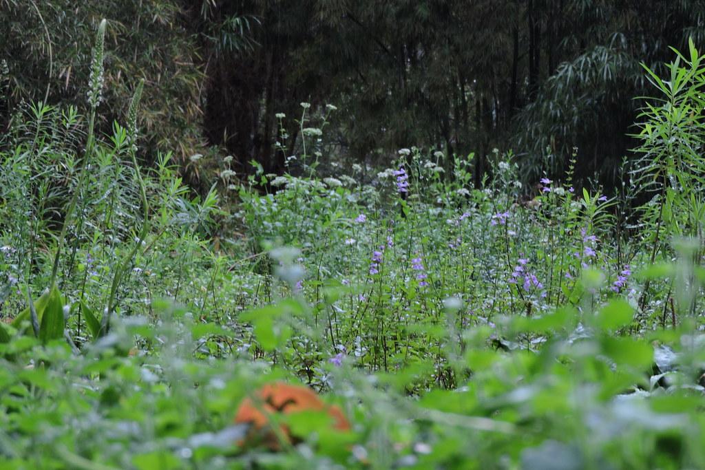 野花園多樣的植物恣意生長。嘉義大學景觀學系提供
