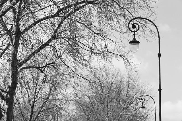Bomen en lantaarnpalen