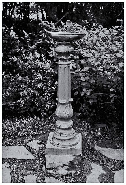 Jardín Botánico (Botanical Garden) 1991