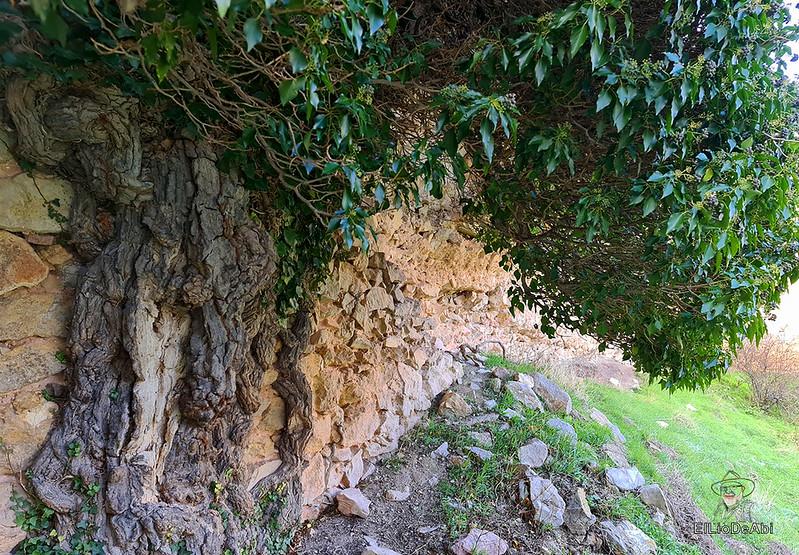 Visitando Caracena y su castillo (26)