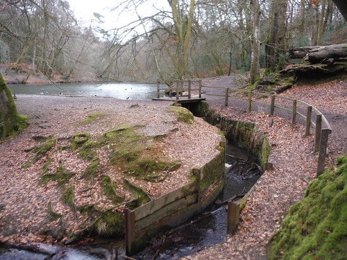 Cooper's Stream/Waggoner's Wells Ponds SWC 377 - Haslemere Outer Orbital Path
