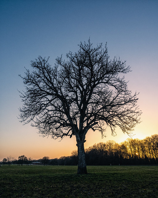 Tree before Sunset... (colour version)
