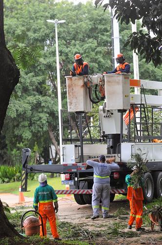Poda de árvore tem hora certa, avaliação de corte e técnica