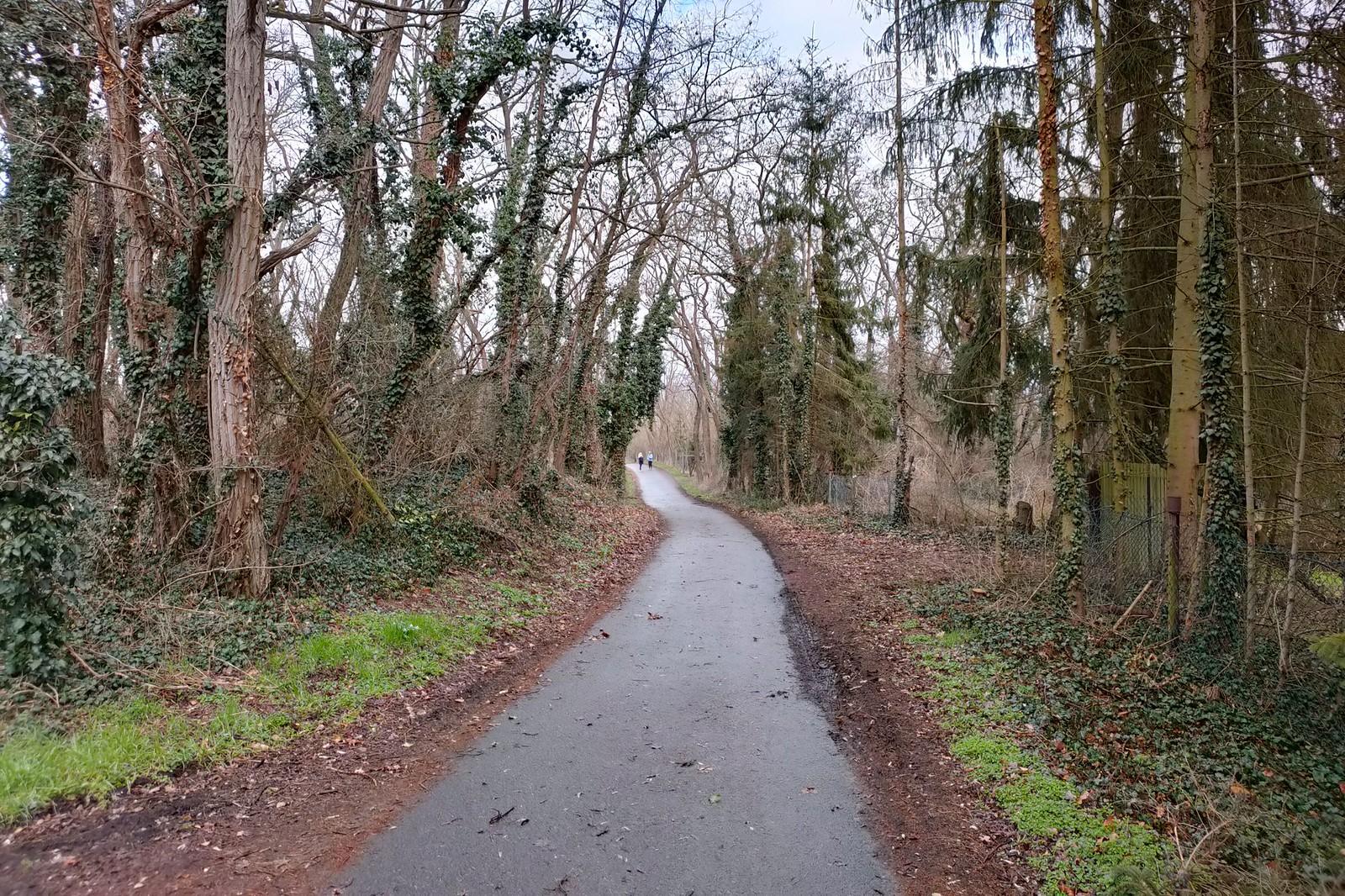Wanderung in den Ingelheimer Auen
