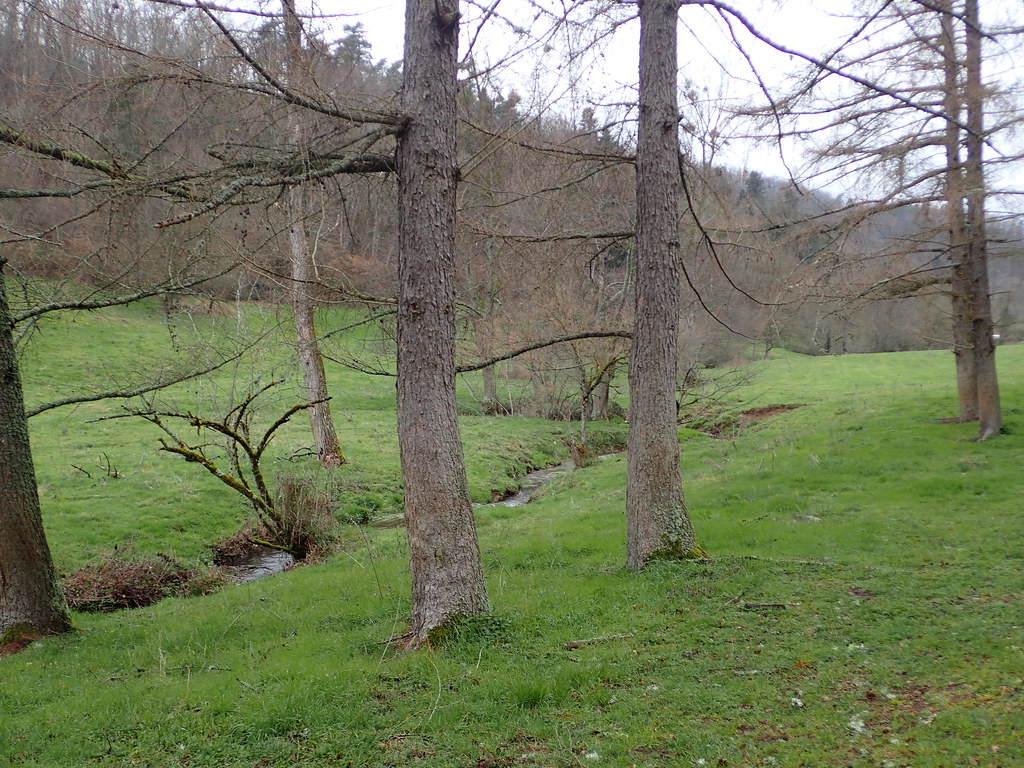 Home (ruisseau de Ricochet et Petit Mauzun)