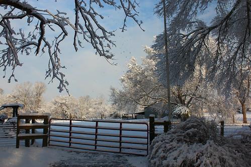texas tx snow landscape trees sunrise