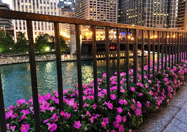 Taking it to the City Streets-Chicago