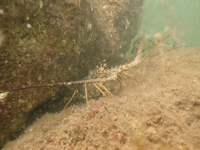 Shore Dive March 31 2021