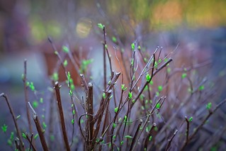 Garden bokeh with the tender new green | March 17, 2021 | In the village of Tarbek in the Segeberg district in the state of Schleswig-Holstein of the Federal Republic of Germany | by torstenbehrens
