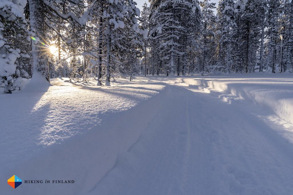 Sunny trails