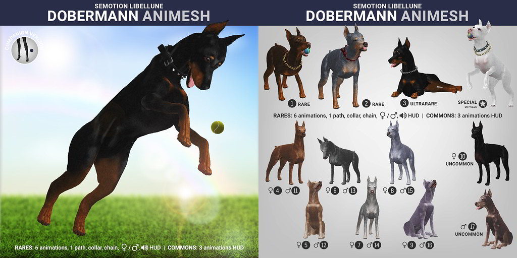 SEmotion Libellune Dobermann Animesh
