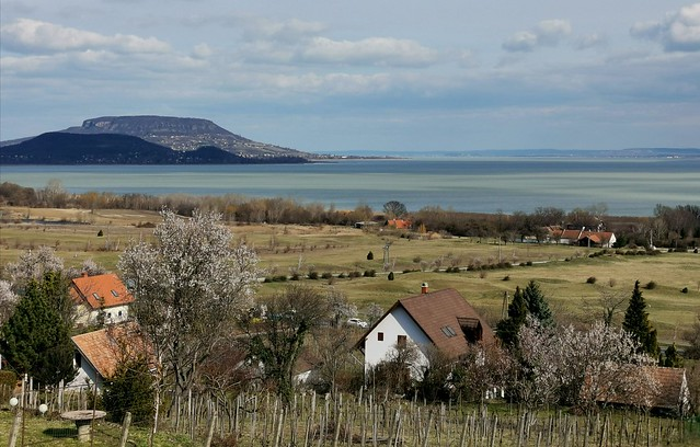 Spring arrives to Lake Balaton with blossoming almond trees [explored]