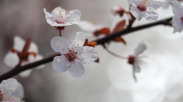 9524 - Flowers