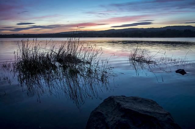 Reeds, Barr Loch, Lochwinnoch, Renfrewshire, Scotland, UK