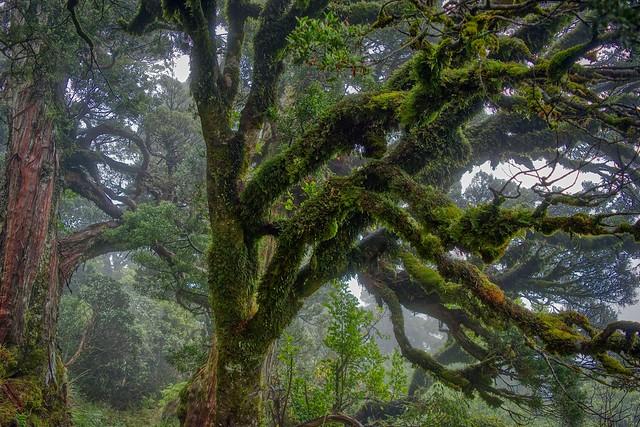 Rangiwahia Trees