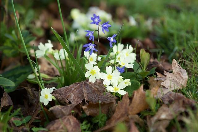 Woodland spring detail