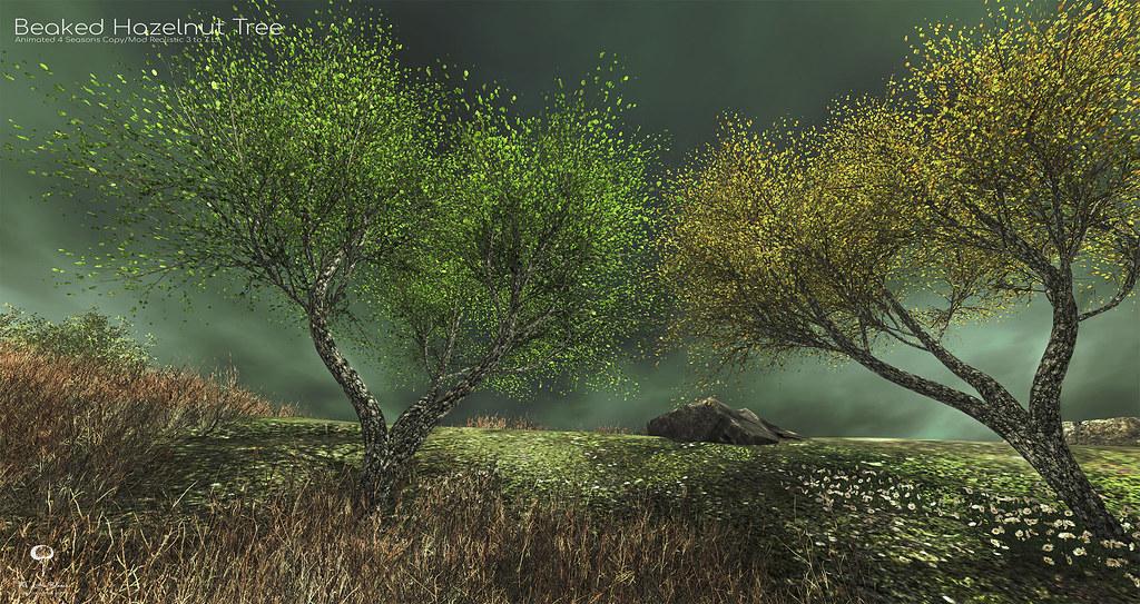 The Little Branch - Beaked Hazelnut Tree - MANCAVE