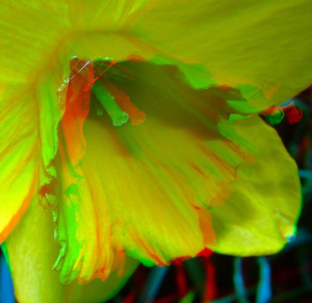 Narcissus 3D Lumix H-FT012 mod.