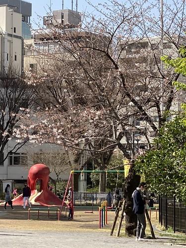 桜 恵比寿 明治通り 2021/3/18