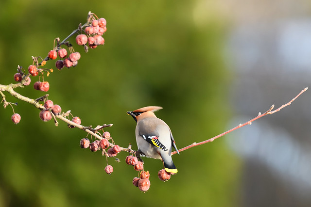Visiting bird