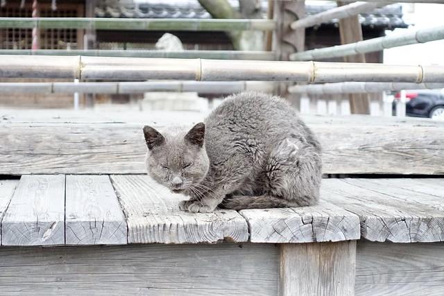 Today's Cat@2021−03−18