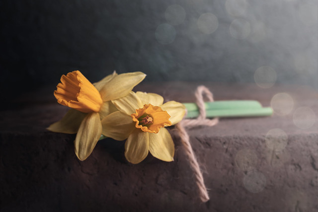 gelbe Narzisse