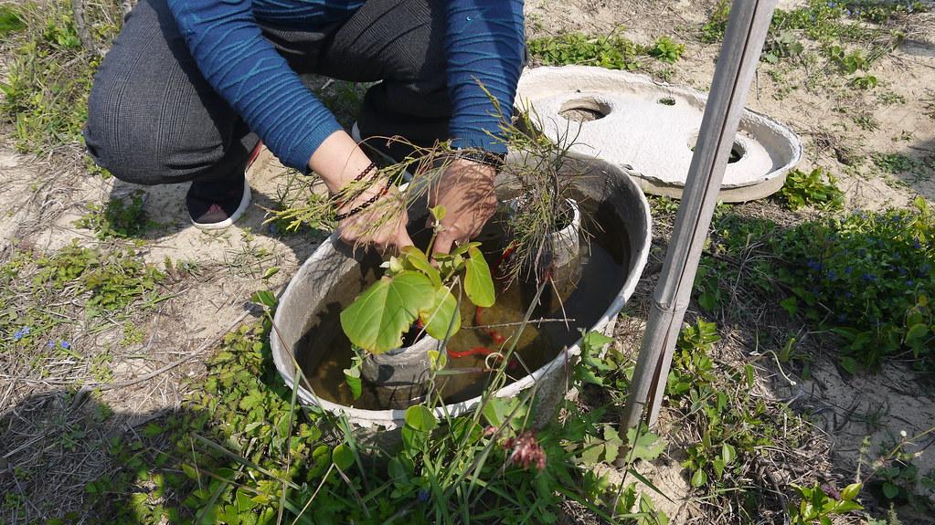 水寶盆的外觀有如元寶,可蓄水、防止水分蒸發,持續透過導水繩精準、不浪費地把水份傳輸到植物的根部。黃思敏攝