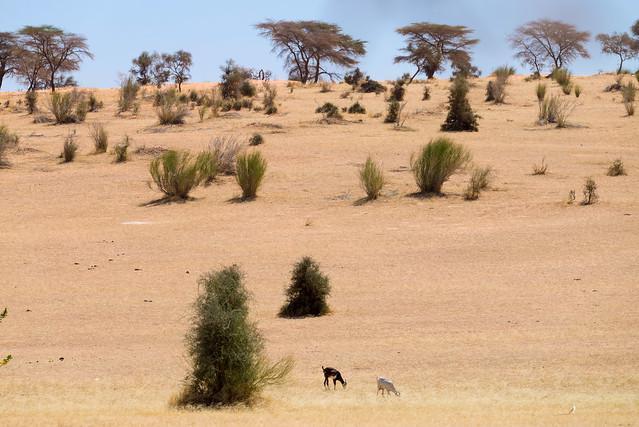 Mauritanie 2021