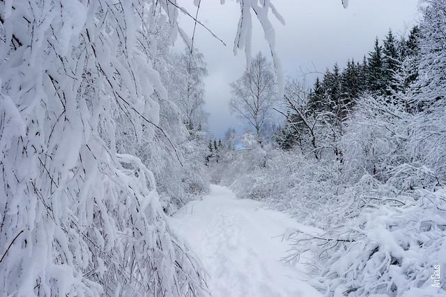 Hiking in the snow along the Weg des Gedenkens to Kreuz im Venn DSC03979