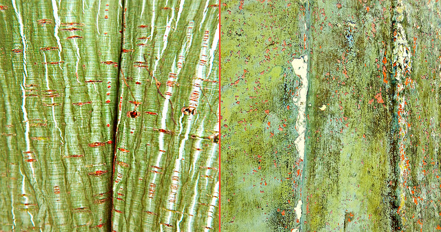 white striped green Snake Bark Maple together with an abstract of a scraped boat hull
