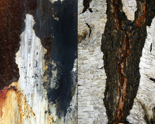 abstract of patchy rust on a dumpster together with fissured Birch bark