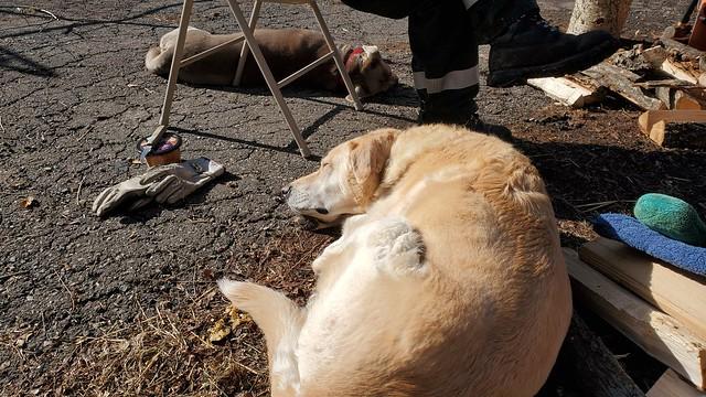 9_helpful_dogs_2