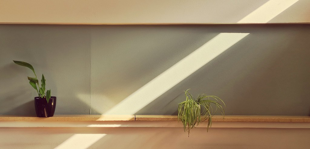 Sun Ray - Plant