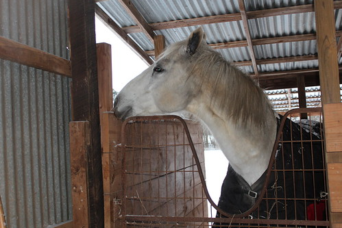 tx texas horse snow