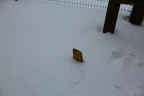 tx texas snow