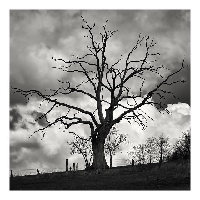 Single Tree #1