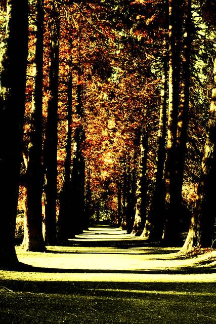 Weg 6 - Iserlohner Hauptfriedhof