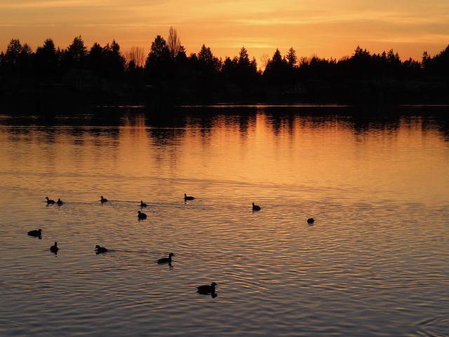 Ducks at Sunset - Lake Meridian