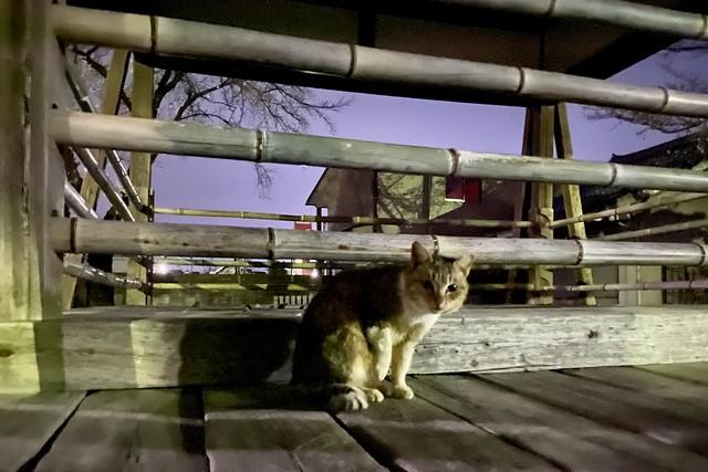 Today's Cat@2021−03−19