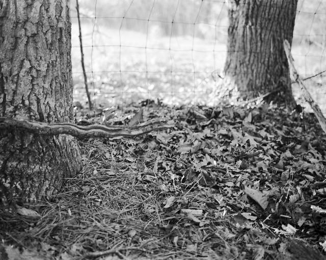 Snake Branch