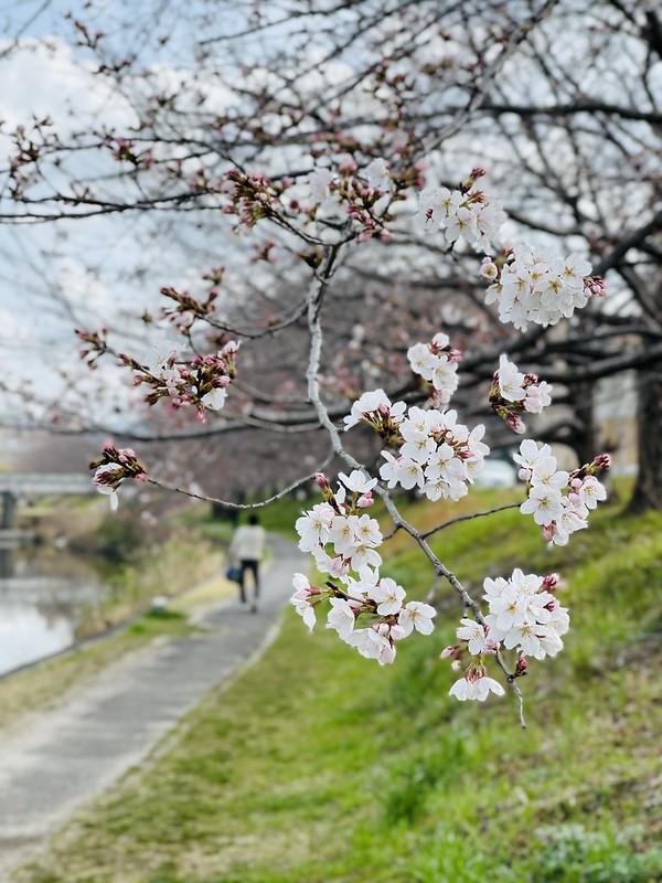 20210320_Sakura_03